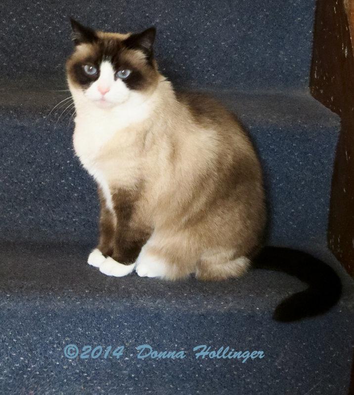 Marthas Cat (lilicat)