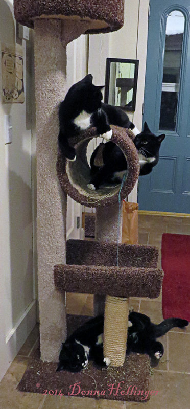 Kitty Tree with Catnip