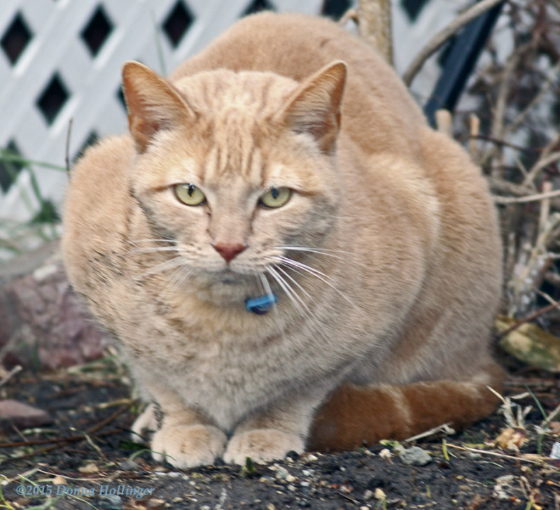 Visitor Cat, Blue Bell