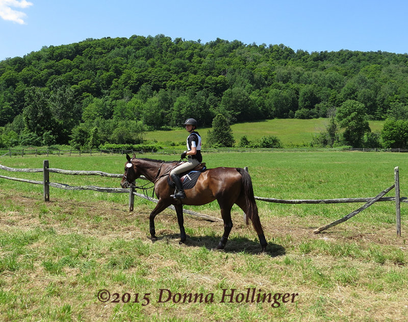 Horse Competition At Huntington Farms