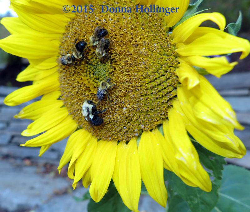 Bigger Bee is the Queen Bumble?