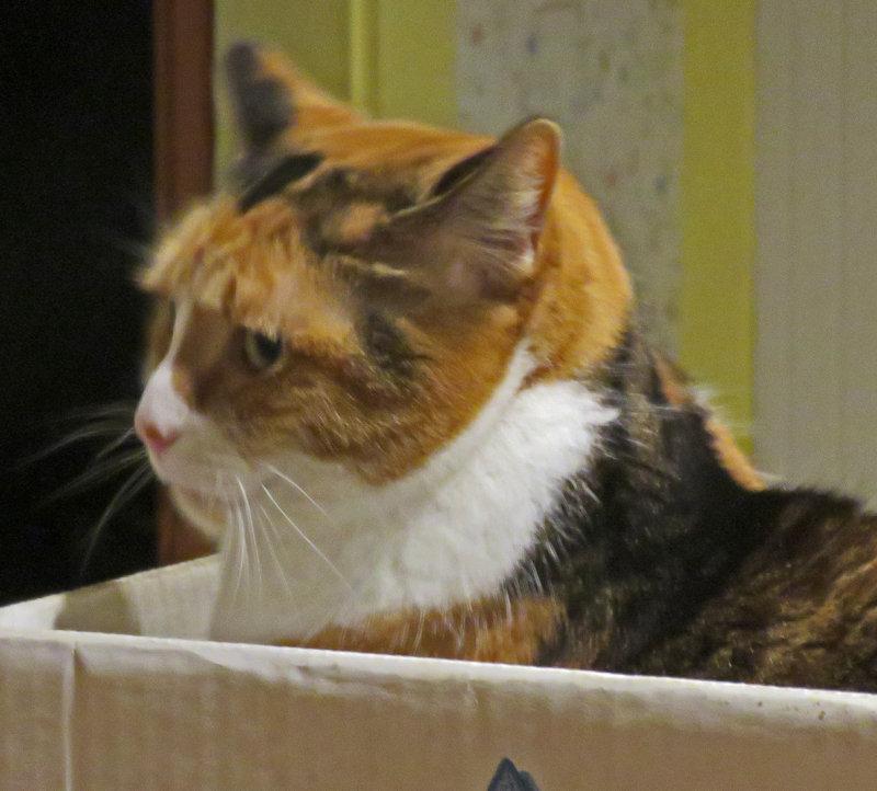 Maizie in the Box