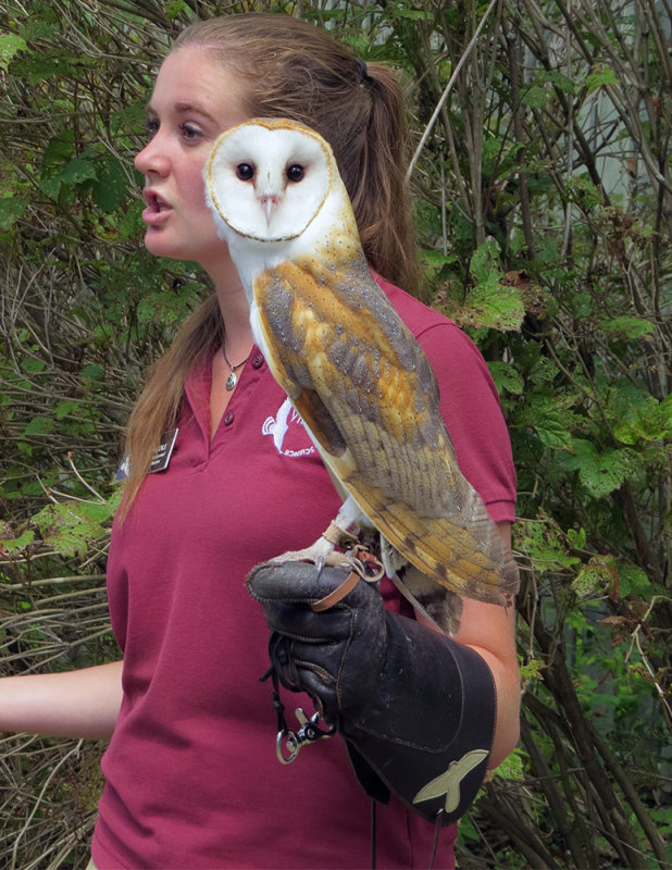 Barn Owl and Her Keeper