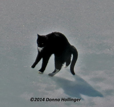 Rocky Prancing on The Ice