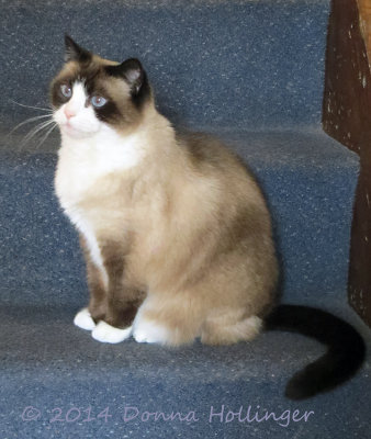 lily, Marthas Cat