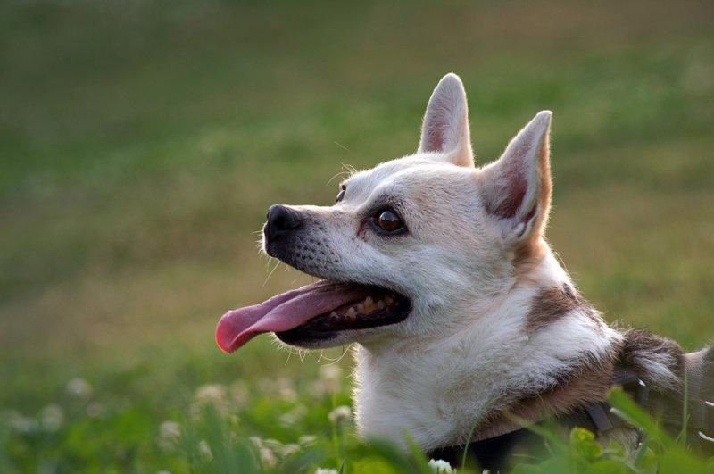 Nacho y su lengua