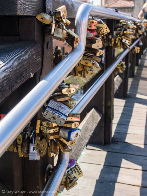 Bridge Padlocks