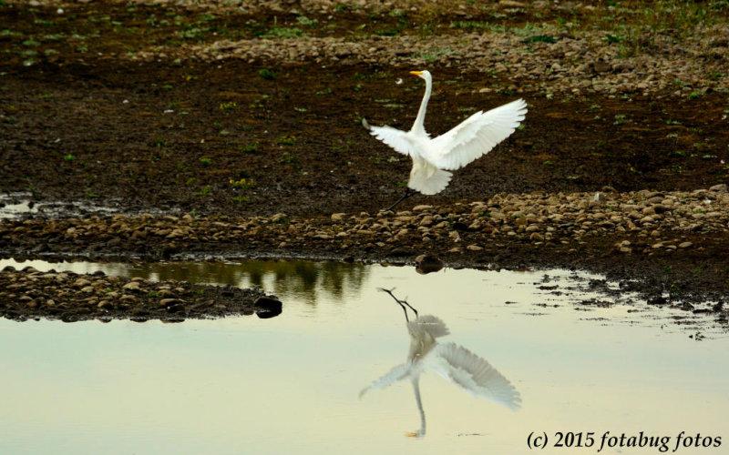 Egret Pond Ballet