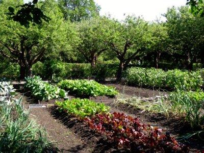Kitchen garden at Skogaholm Manor