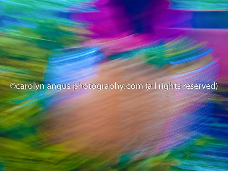 P1050164-Edit.jpg