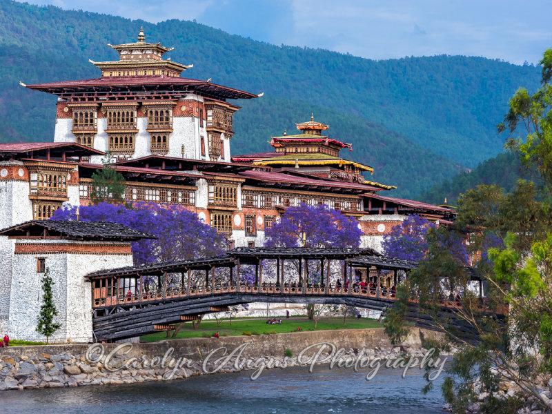 Punakha Dzong Pungtang Dechen Photrang Dzong.jpg