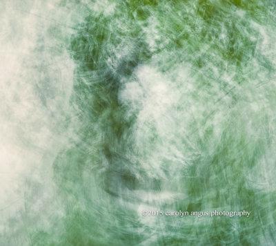 Mystical_Enshrouded_Tree.jpg