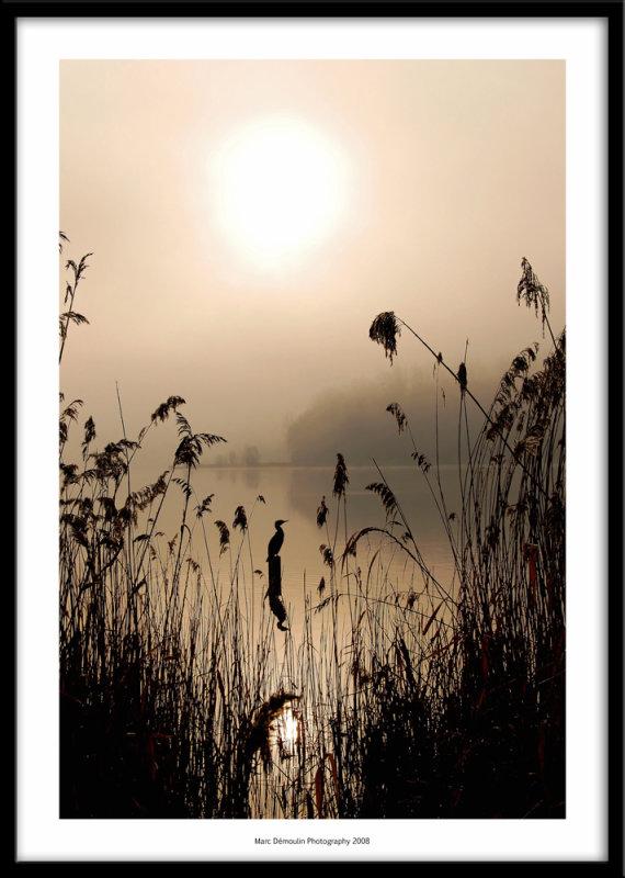Dawn at the lake, Chelles, France 2008