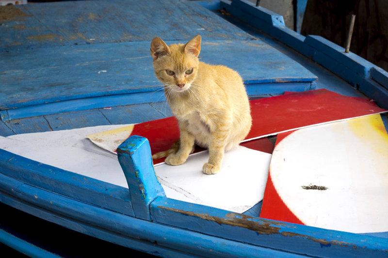 nautical kitty