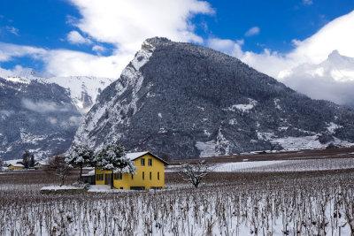 Dormant vineyards