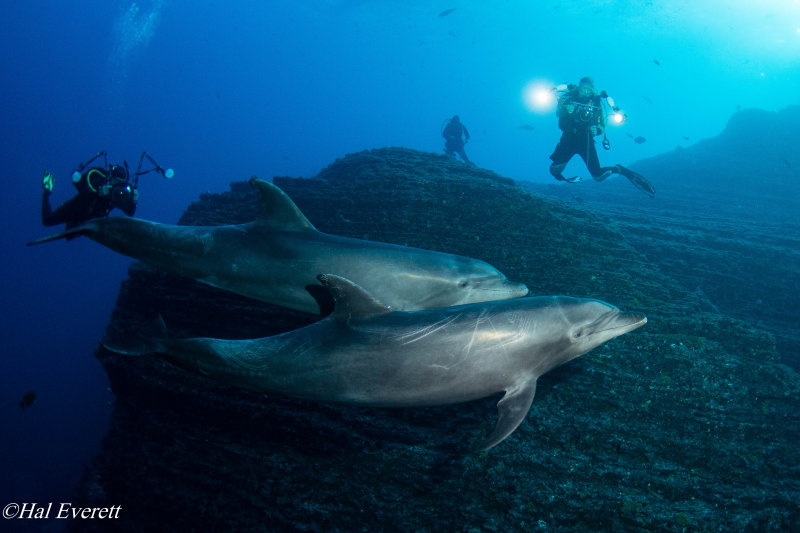 Dolphins and Divers
