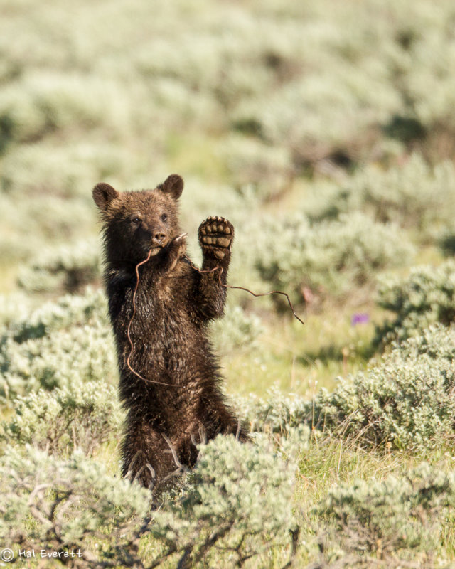 Farewell from Yellowstone