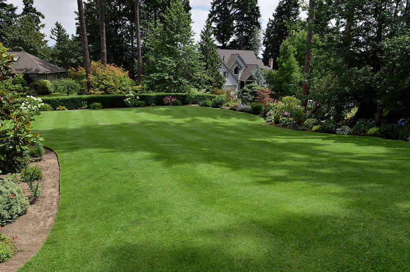 Ff Amp Colonial Bent Grass For Western Wa Aroundtheyard