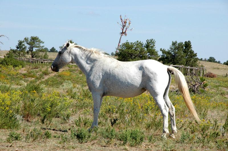 Horse in White