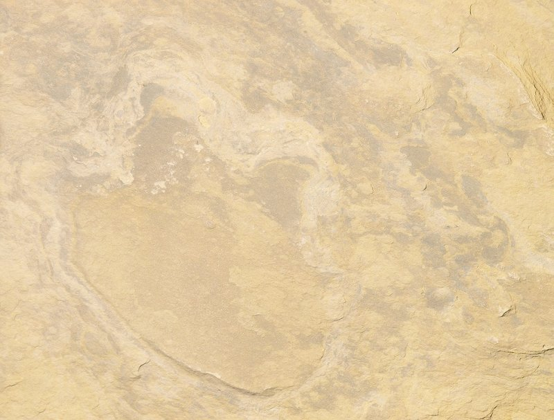 LB148006 dinasaur track see claw.jpg