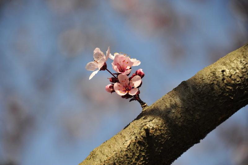 Mar.  An Early Spring.JPG