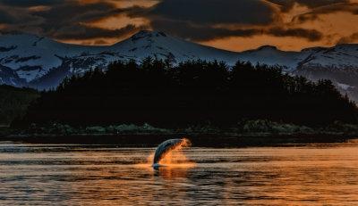 Whale aloft, near Admiralty Island, Alaska, 2013