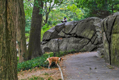 Juxtaposition, Central Park, New York City, New York, 2013
