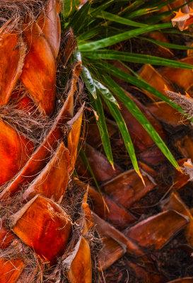 Palm, Santa Barbara, California, 2014