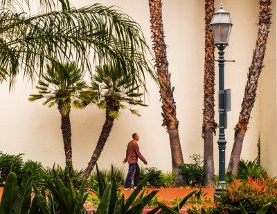 Urban palms, State Street, Santa Barbara, California, 2014