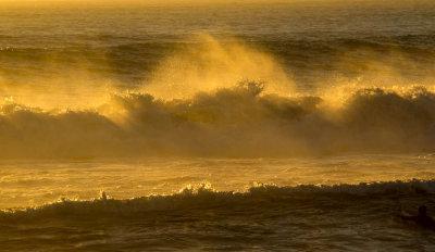Golden fury, Imperial Beach, California, 2014