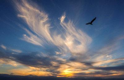 Wings, Imperial Beach, California, 2014