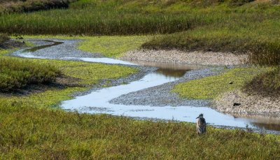 Green Heron, Tijuana River National Estuary, Imperial Beach, California, 2014