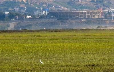 Snowy Egret, Tijuana River National Estuary, Imperial Beach, California, 2014