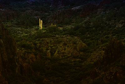 Isolation, Peralta Canyon, Arizona, 2014