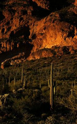 The colors of nature, Peralta Canyon, Arizona, 2014