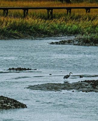 Heron, en route to Beaufort, South Carolina, 2014