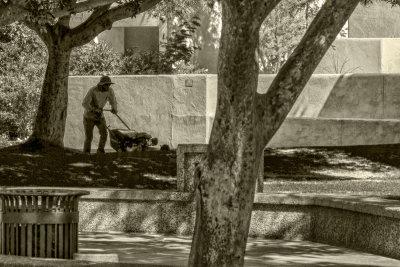 Grooming the park, Scottsdale, Arizona, 2016