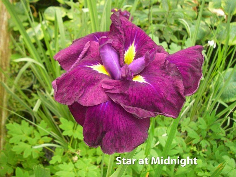 StarAtMidnight_small.jpg