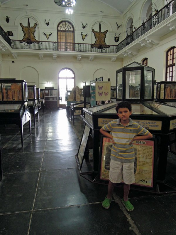 Visit the Forest Institute Entomology Museum