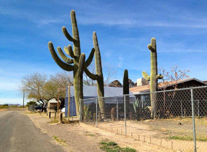World-record-size cacti?