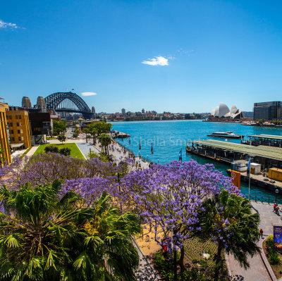 Sydney Harbour with jacaranda