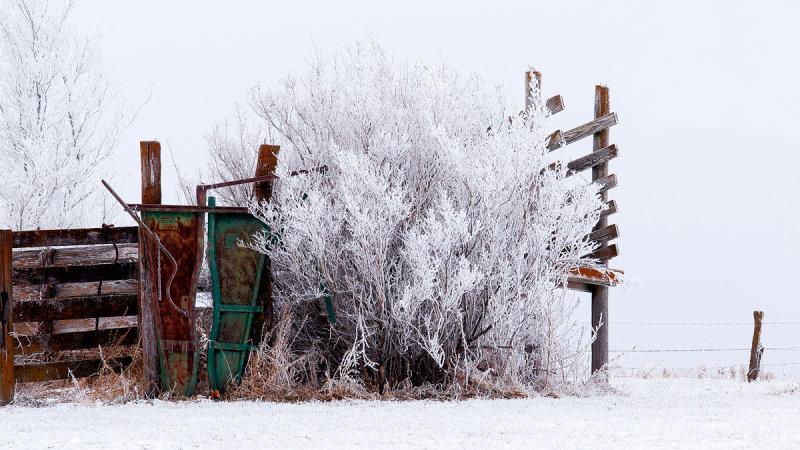 Frozen Fog on Cattle Chute