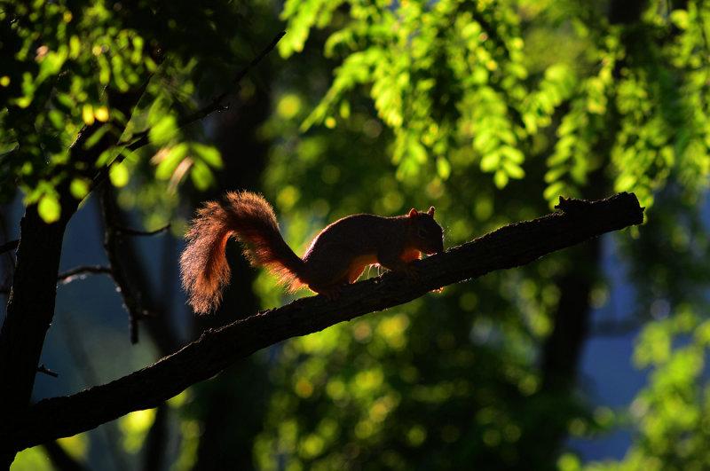 Resident Squirrel