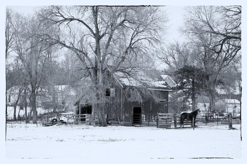 Winter Scene (Black & White)