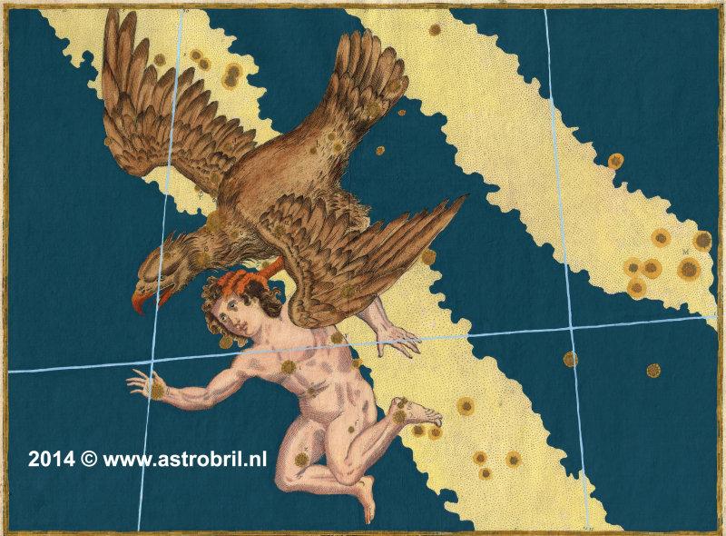 Plate 16 - Aquila