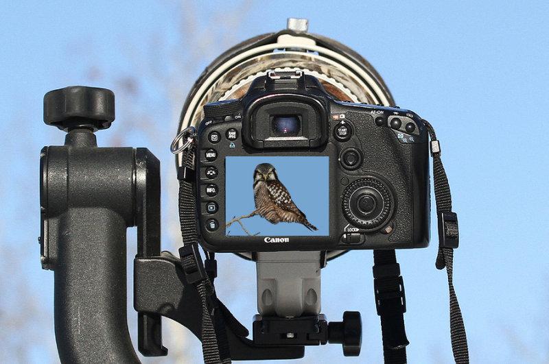 The World Through My Lens