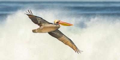 La Jolla Pelicans December 2013