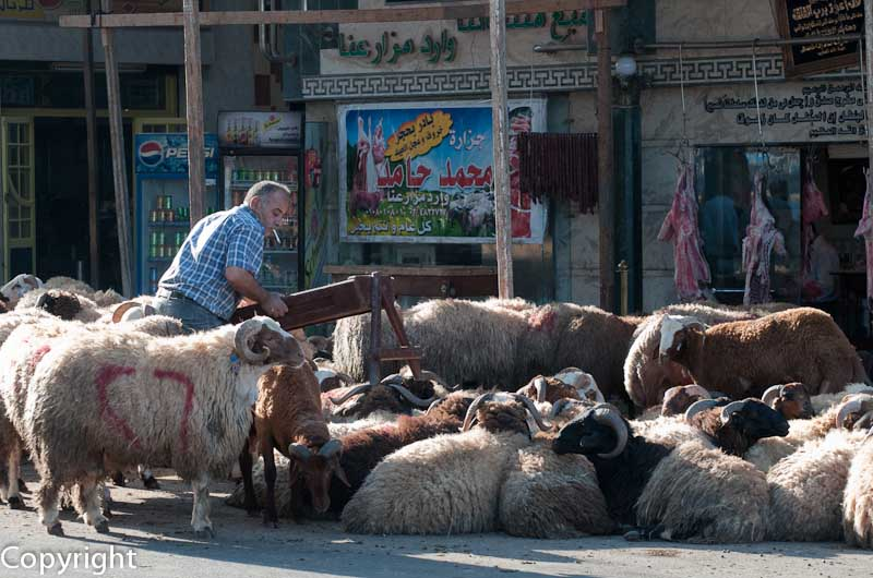 Lambs to the slaughter, Alexandria