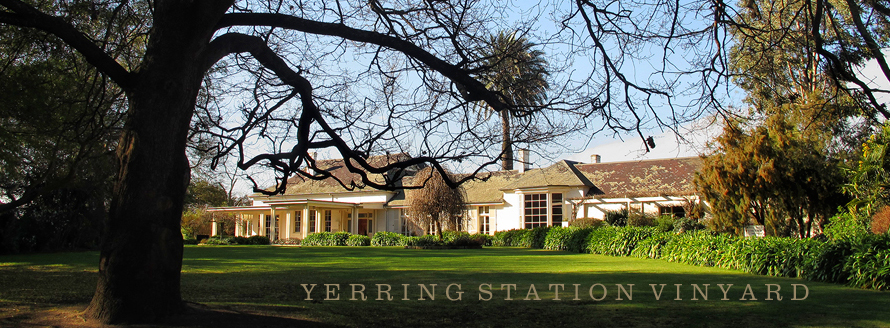Yering Station Vinyard & Yering Station Vinyard Photo Gallery by Range View at pbase.com