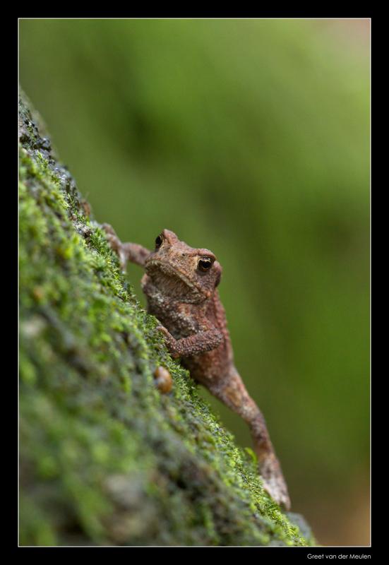 5865 toad climbing a tree
